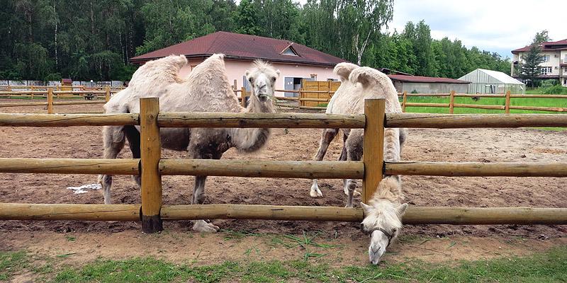 Зоопарк Русское подворье