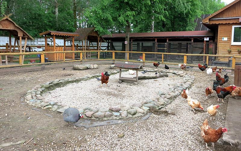 Зоопарк в Подмосковье