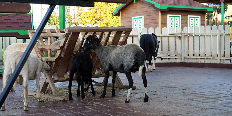 Мини-зоопарк Лапушки в Сочи Парк