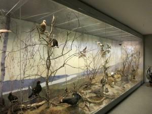 музей природы в приокско-террасном заповеднике