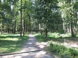 Прогулка по лесу недалеко от Орла