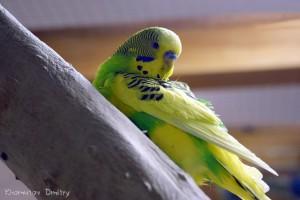 Вольер с попугайчиками – не только красивый, но и «музыкальный»