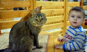 Вольер с кошками – одна из главных достопримечательностей зоопарка