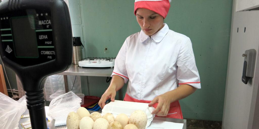 Индюшиные яйца на ферме по 150 рублей за десяток