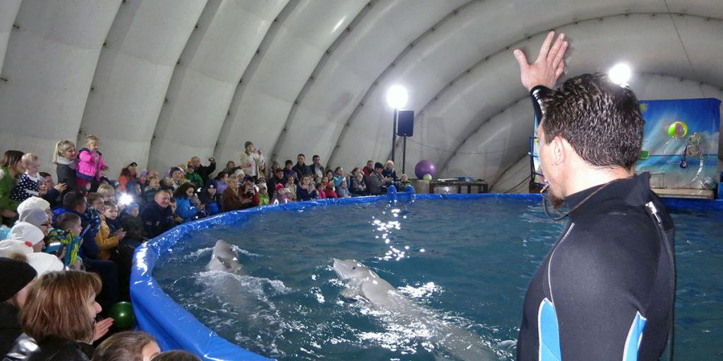 Дельфинарий в Орле