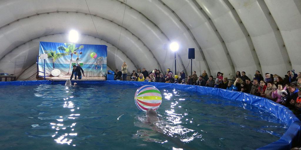 Дельфины показывают акробатические номера