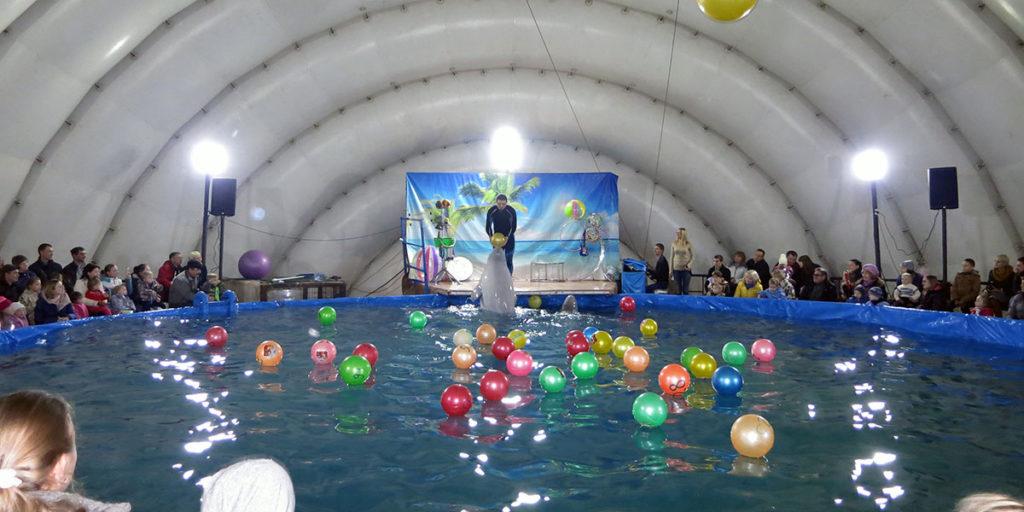 В лотерею выигрывает тот, чей шар понравится дельфину