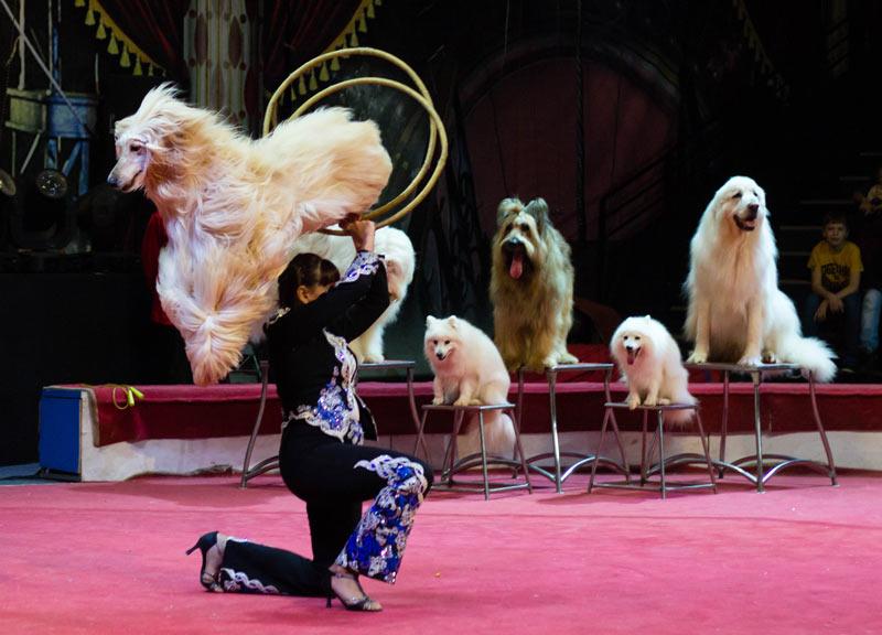 Дрессировщица собак Татьяна Мартынова