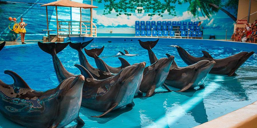 Дельфинарий Немо Анапа