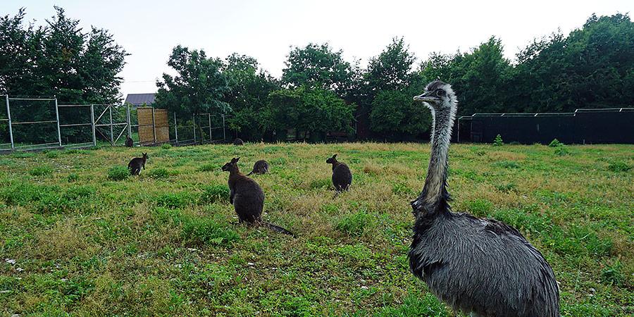 Животные в парке ДоДо